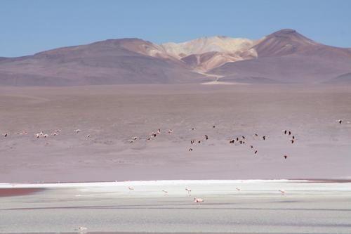 ALBUM - CHILI 2009 :  ALTIPLANO CHILIEN ET BOLIVIEN