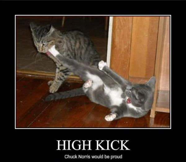 chats-high-kick.jpg