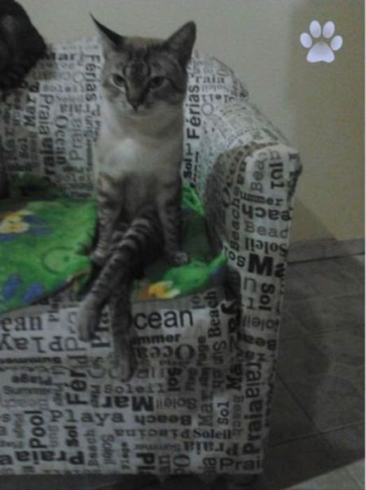 basic instinct cat