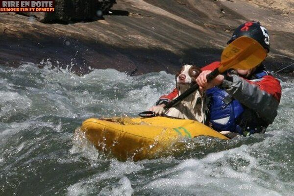 chien-canoe.jpg