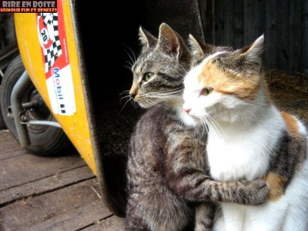 cats-hugging.jpg