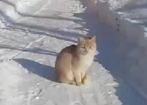 Chat-attrape-la-neige.jpg