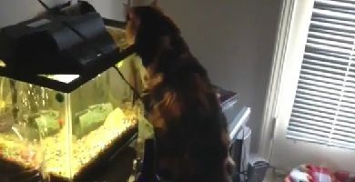 Chat-VS-Poisson-copie-1.jpg
