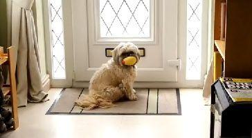 Un-chien-qui-deteste-le-courrier.jpg