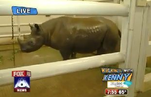Un-pet-de-Rhinoceros-en-direct-live.jpg