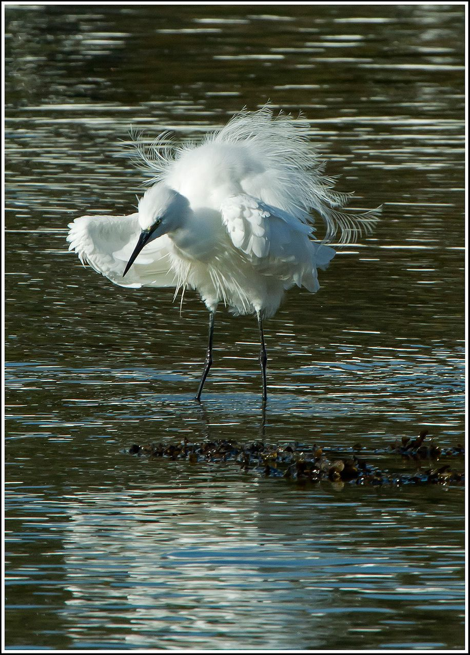 MG aigrette-web