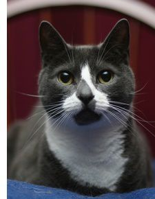 Sockington 450-f4518