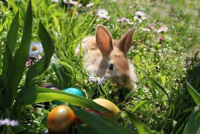 La chasse aux oeufs lena g th me et photo de marie for Decoration jardin lapin