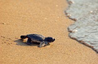 animal-tortue-de-mer-ae.jpg