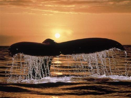 animal baleine-couche-soleil