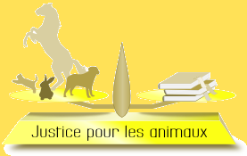societe civile justice pour les animaux 0000 en action