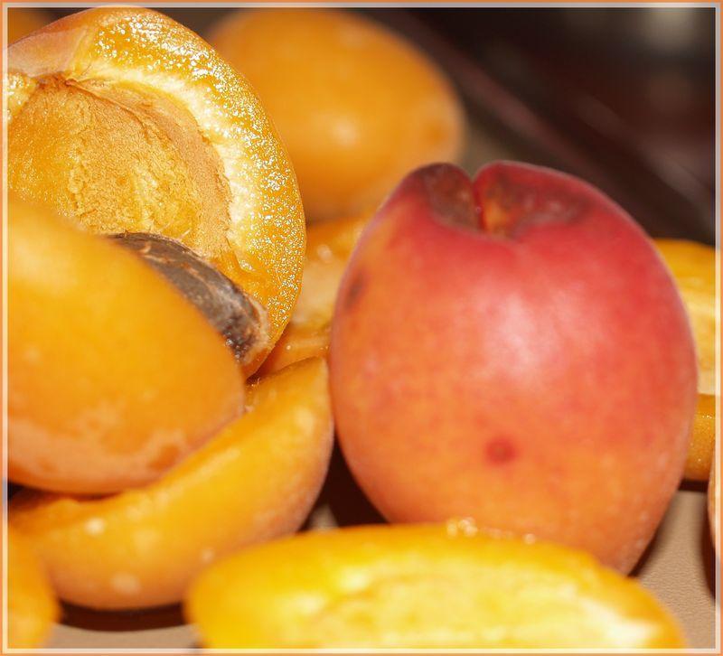 abricots_1