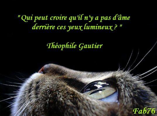 chat-gautier.jpg