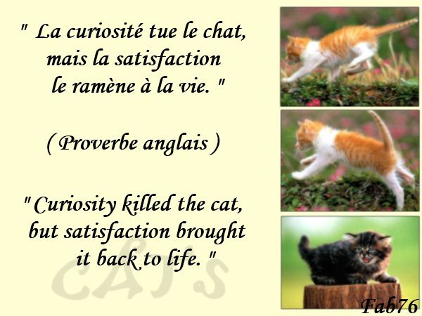 chat-proverbe-anglais.jpg