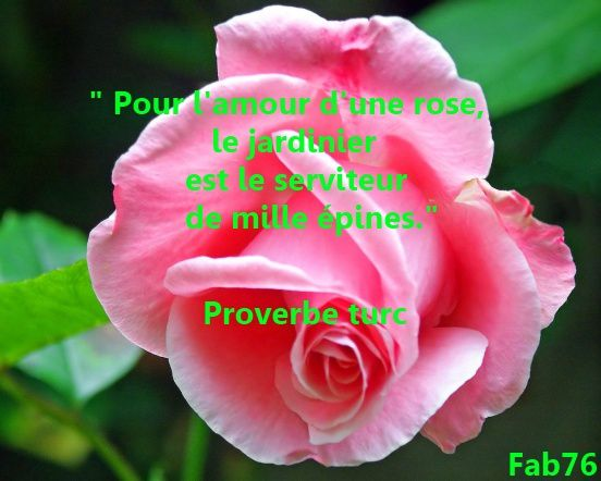 amour-d-une-rose-proverbe-turc.jpg