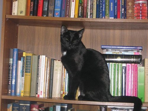 chat-et-books-11.jpg
