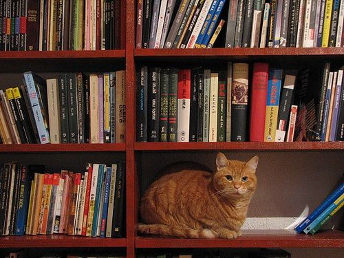 chat-et-books-21.jpg