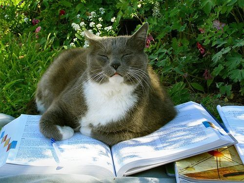 chat-et-books-4.jpg