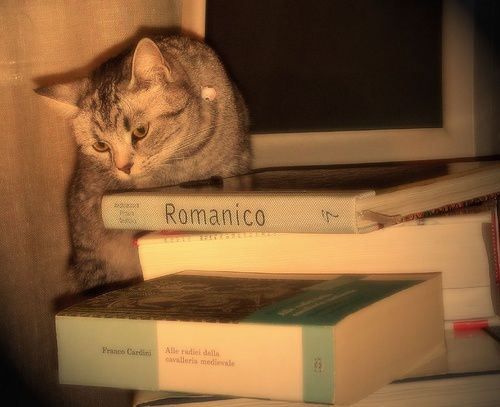 chat-et-books-5.jpg