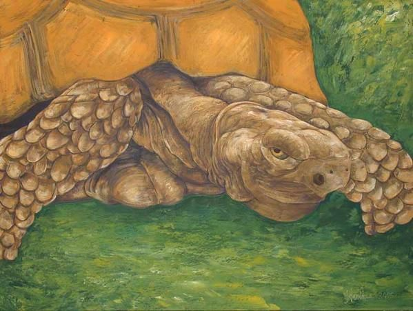 Décoratives and figuratives contemporary paintings about animals, turtle, big size picture 130x97Cm, oil on canvas.