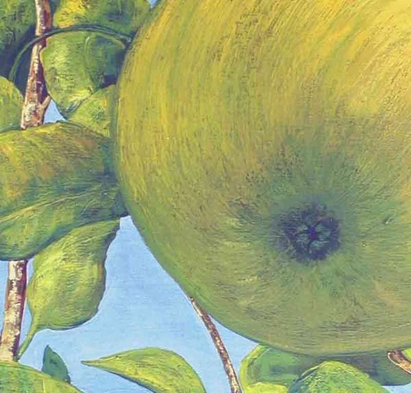Blu sky and apple in a tree. Détail of the picture '' GRANY ''. Oil on canvas big size 1Mx73Cm. Décorative painting by Alexandre Houllier