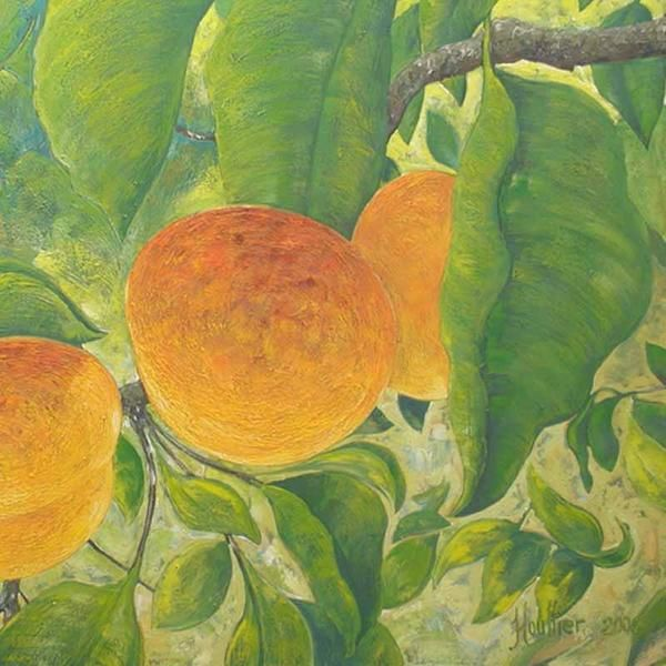 Oils on canvas, Décoratives landscapes, Végétables and fruts, apricots in a tree. Détail de la toile '' ABRICOTIERS ''. Painting by Alexandre Houllier, french artist drawer and painter from provence