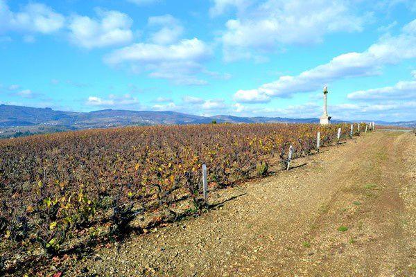 Beaujolais-2012 0229