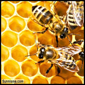 Bees.jpg
