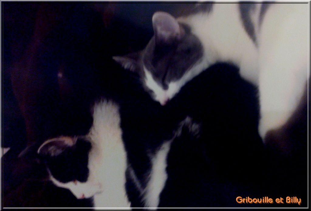 Nos proches ou d'adorables chats adoptés depuis.