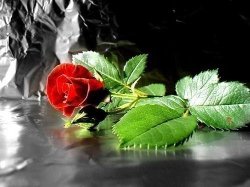 Les roses et l'Amour