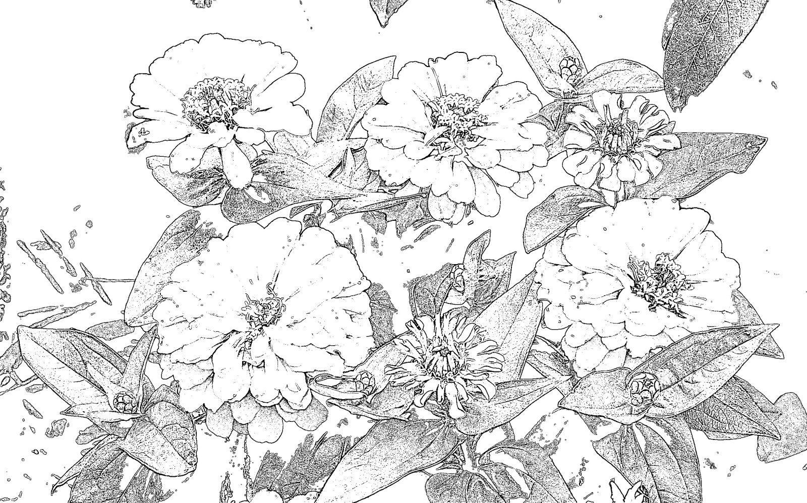 Malvorlagen Vorlagen Aus Dem Garten Diverse Blumen Wie Clematis
