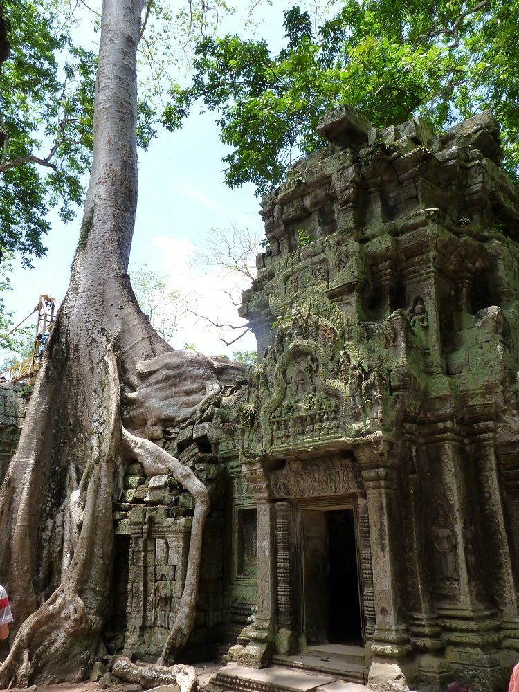 Cambodge l 39 incroyable fromager de ta prohm le blog for Le jardin fromager