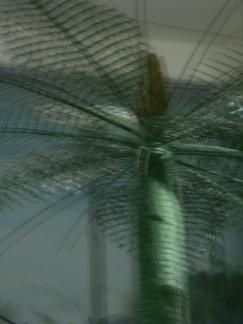 IMGP0675 MHN palmier FLOU