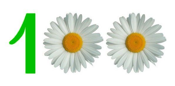 1 et 2 marguerites