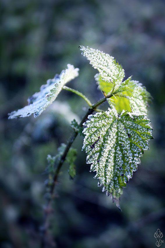 Album - FOTO botaniques*