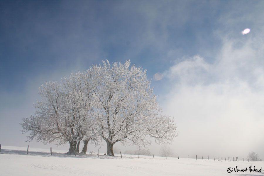 L'arbre sous toutes ses formes