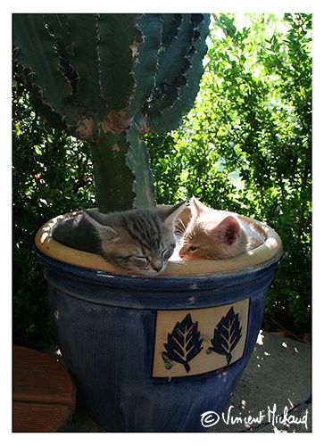 chatons sous le cactus IMG 0401 x500