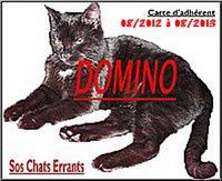 DOmino_2011-carte-adherent-2013.jpg
