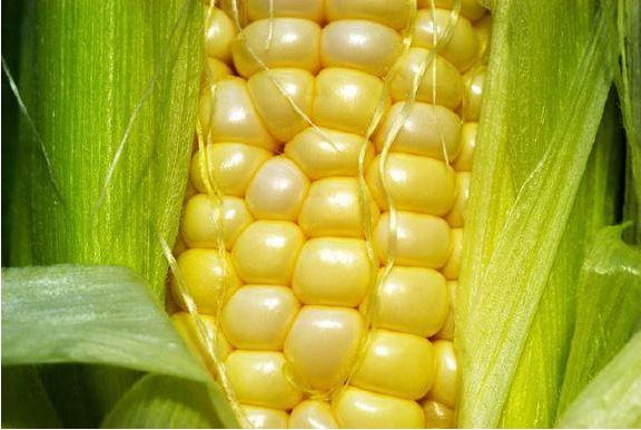 Le-Monde-OGM.jpg