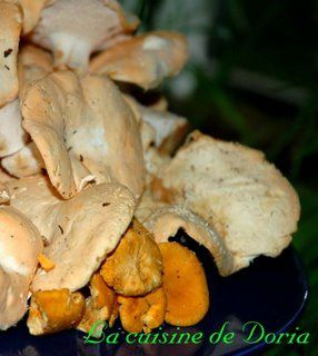 Fricassee Of Chanterelles Recipes — Dishmaps