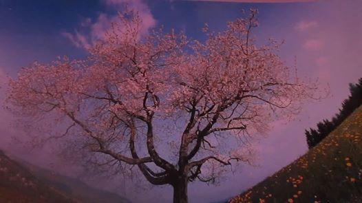 printemps-1.jpg