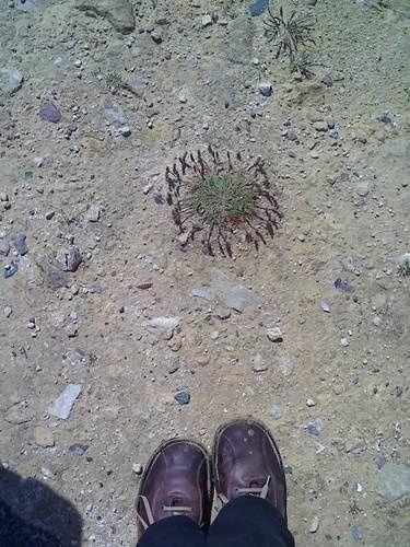pas_2012_07_0x_plantedeplage.jpg