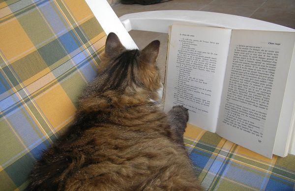 Le-chat-sait-lire.jpg