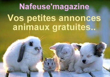 nafeuse-annonces-animaux.jpg