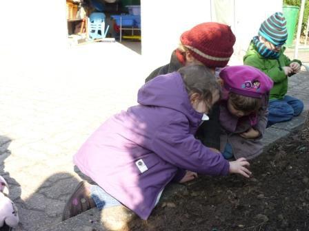 Jardinage la maternelle d 39 ernolsheim bruche for Garder un amaryllis