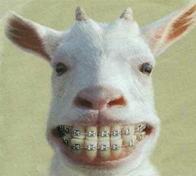 humour animal 072