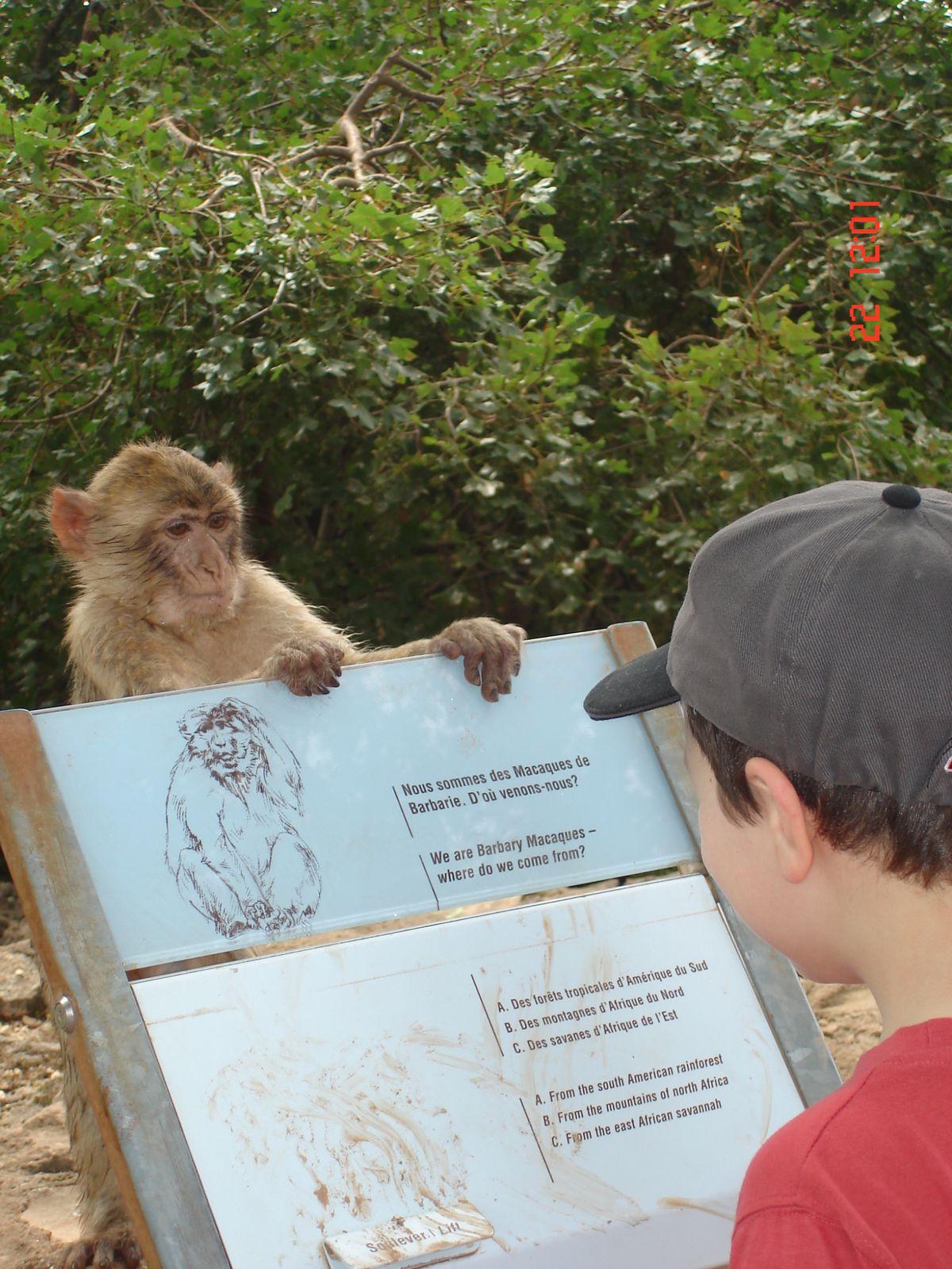 La vallée des singes 24
