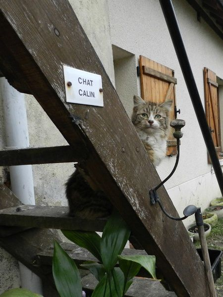 Concressault-Chat-Calin.JPG