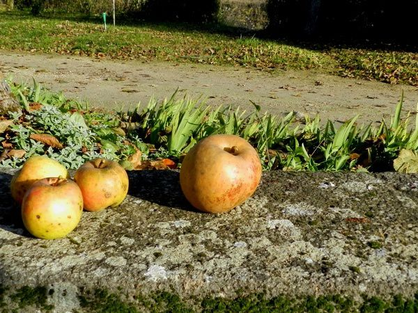 vieilles-pommes-2013-12-08--1-.JPG