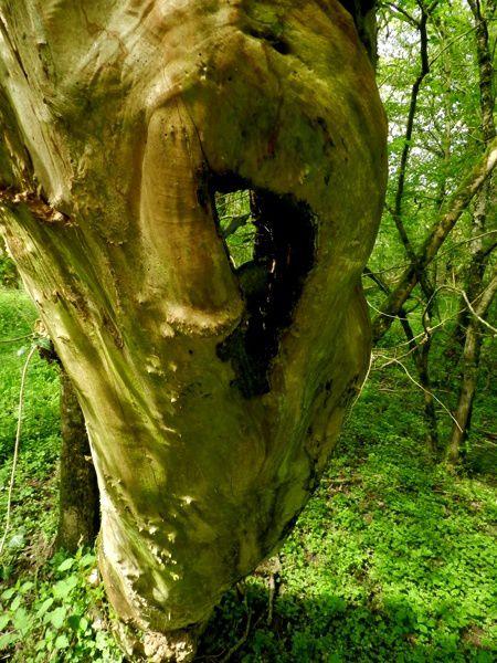 15-arbre-mort-poli.JPG